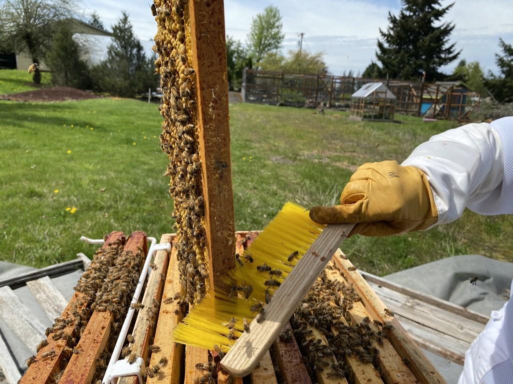 Brushing bees