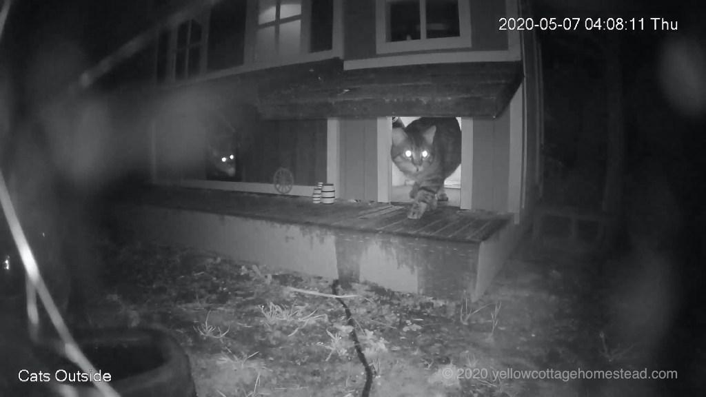 Alien cat with two inside