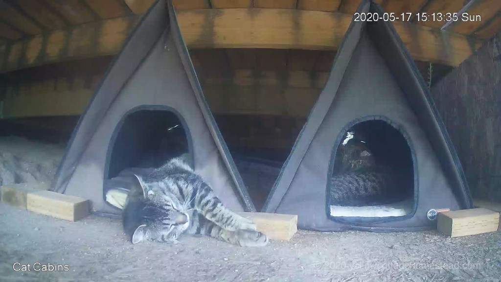 Cats in cabins
