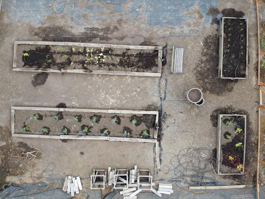 Aerial view of veggie garden