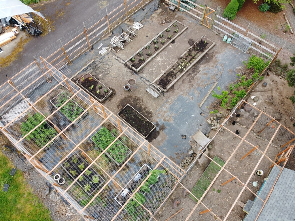 Aerial view of veggie garden