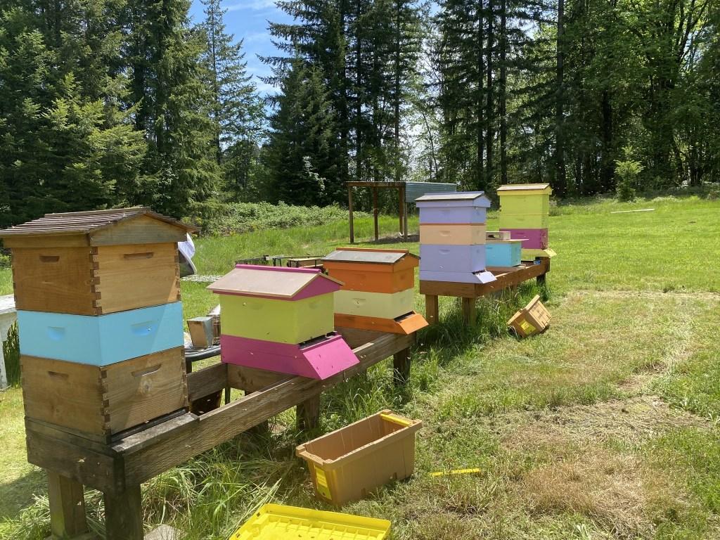 Six hives
