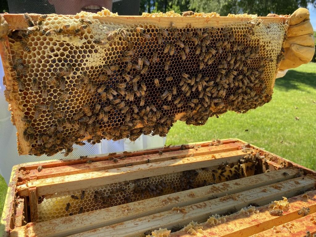 Yellow hive honey frame