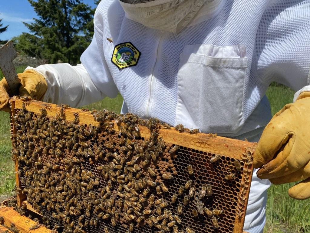 Cedar hive brood frame