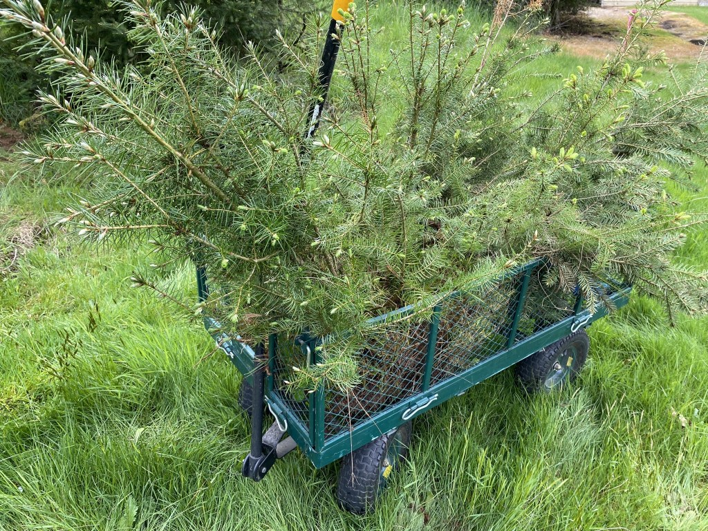 Trees in cart