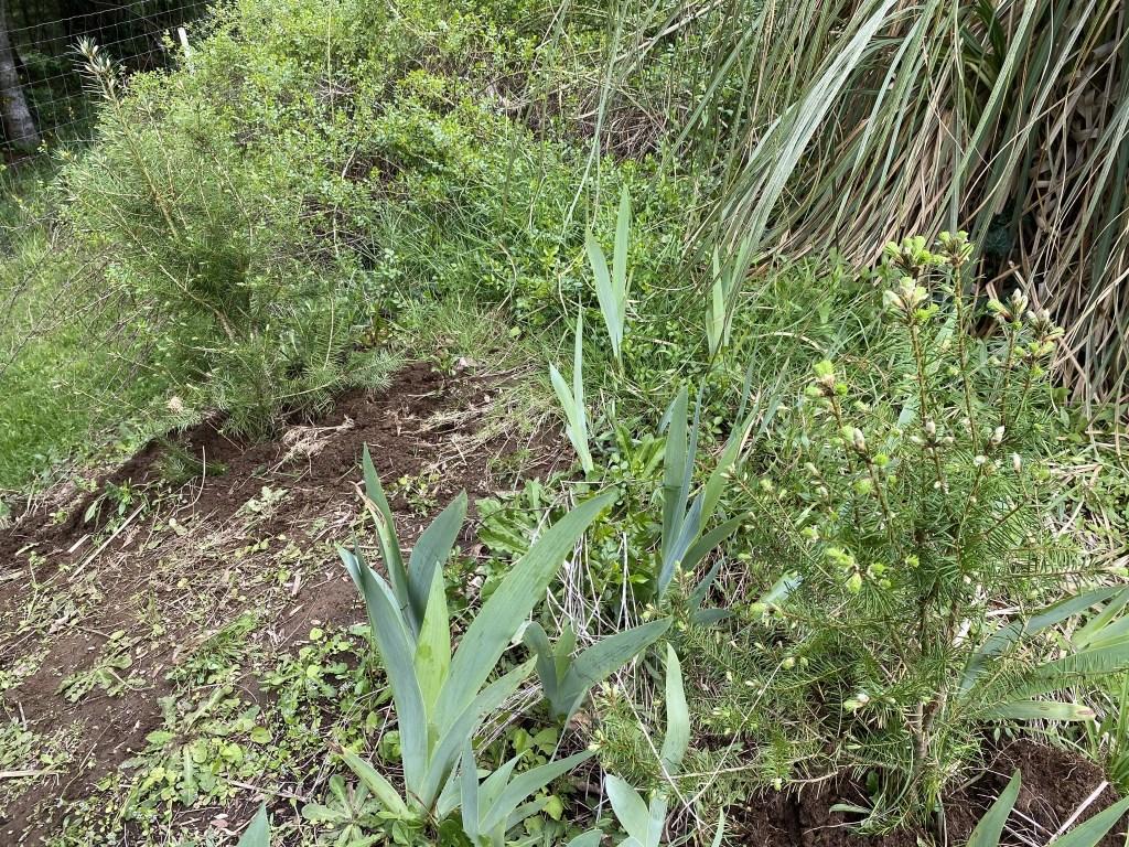 Two seedlings behind pond