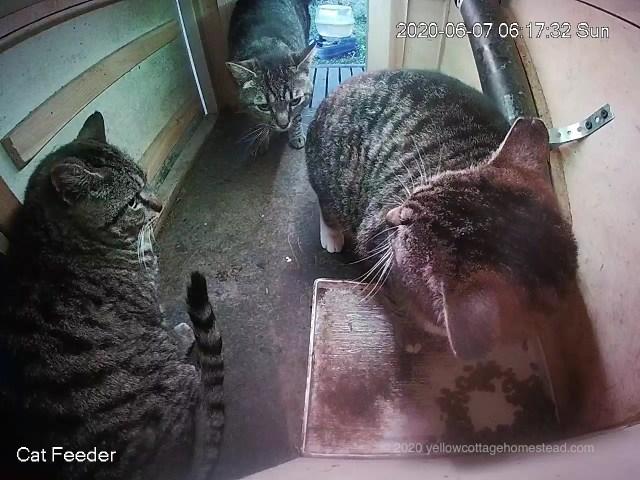 Feeder cats