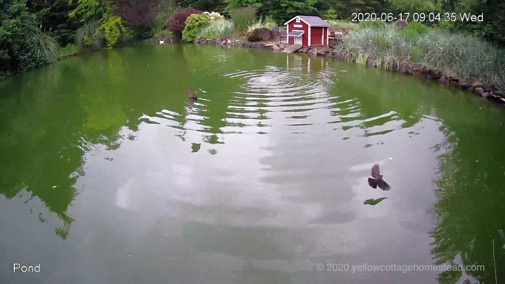 Birds over pond