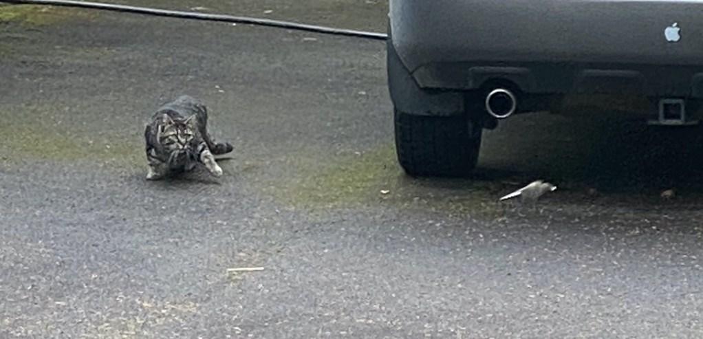 Cat chasing bird
