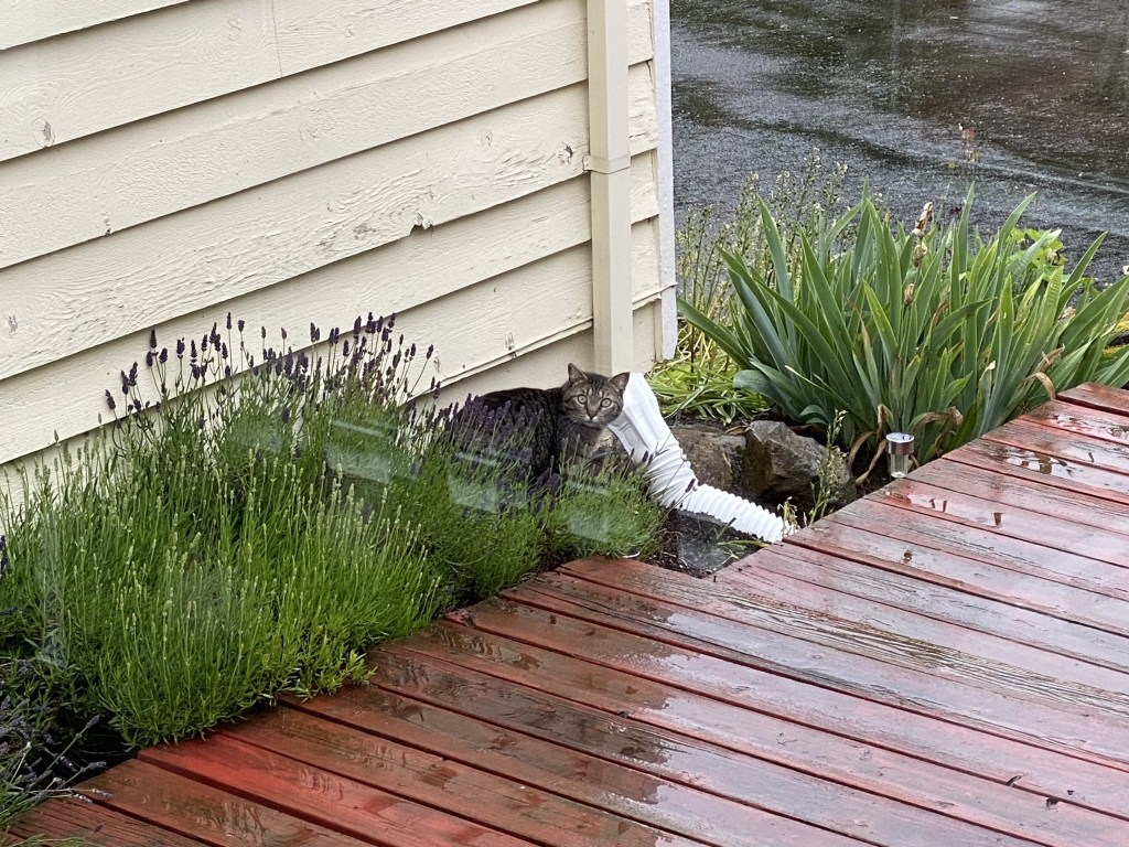 Cat by front steps