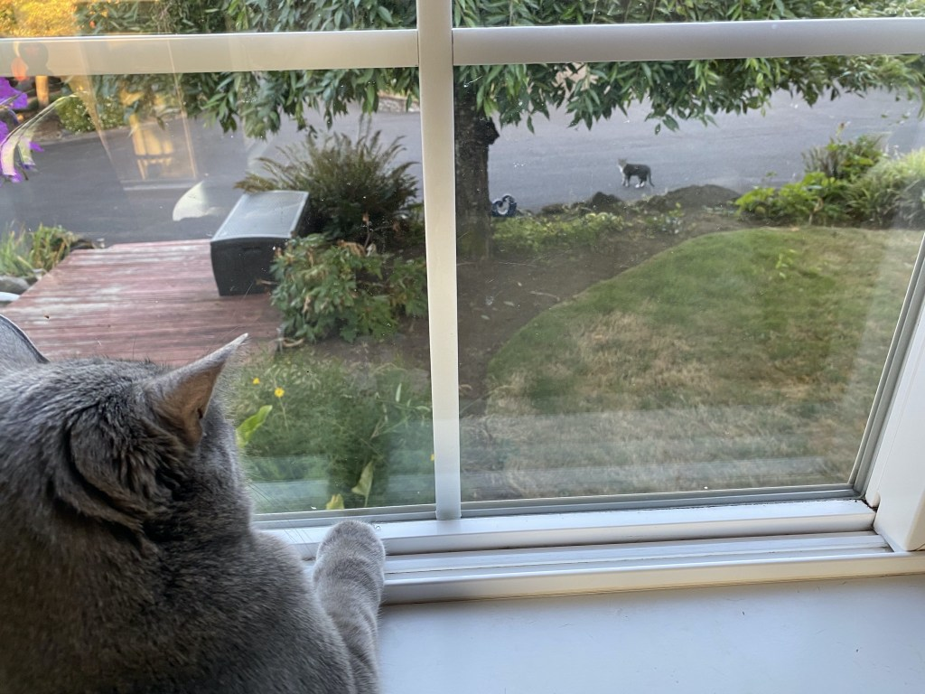 Paladin watches Bella on the driveway
