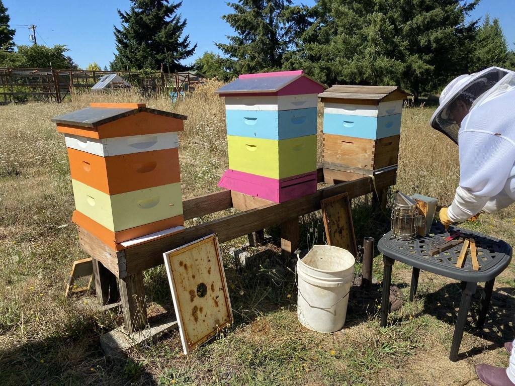 Behind hives