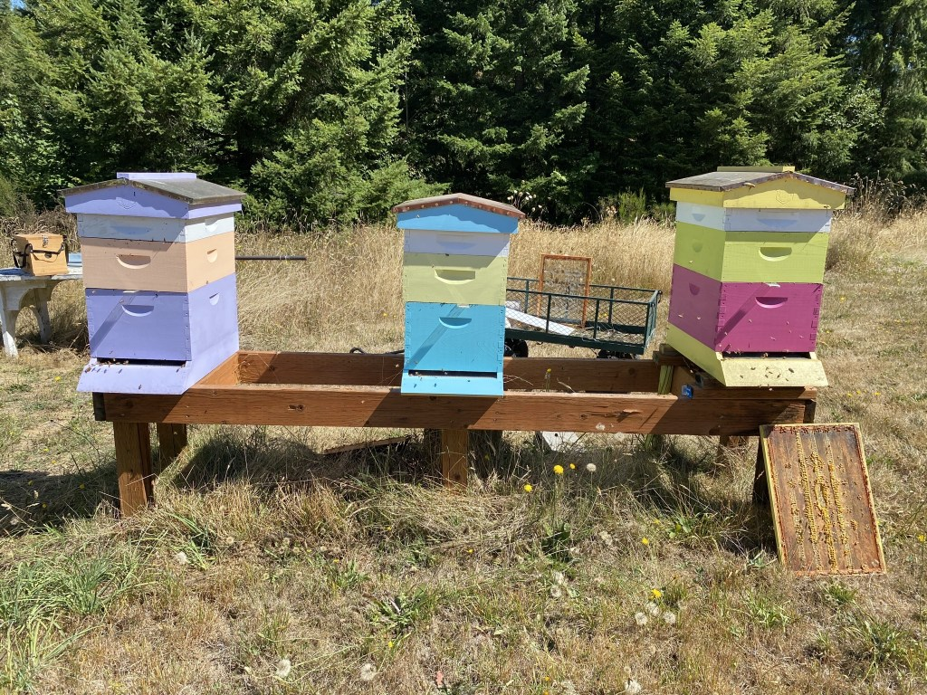 Purple, Turquoise, Yellow hives