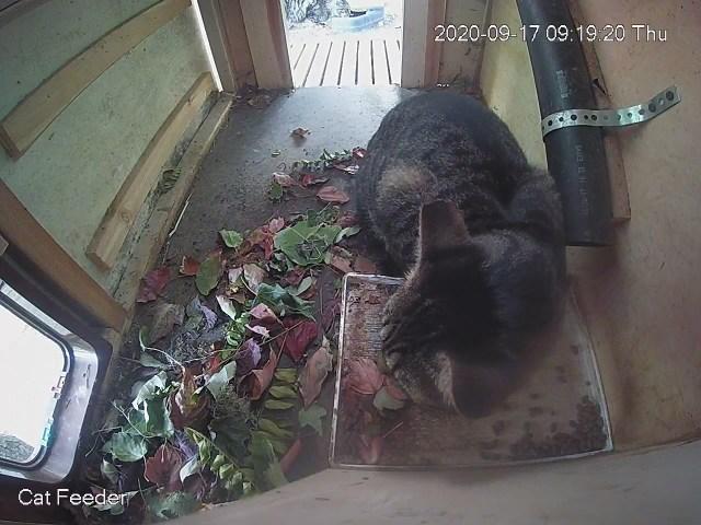 Leafy feeder