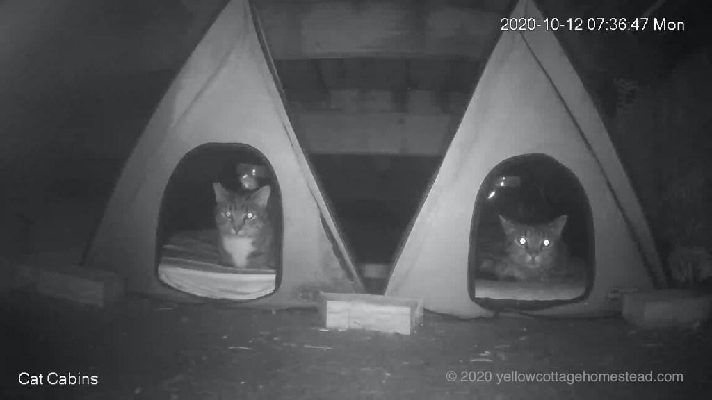 Cabin cats