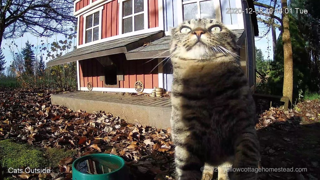 Cat about to jump onto the camera housing