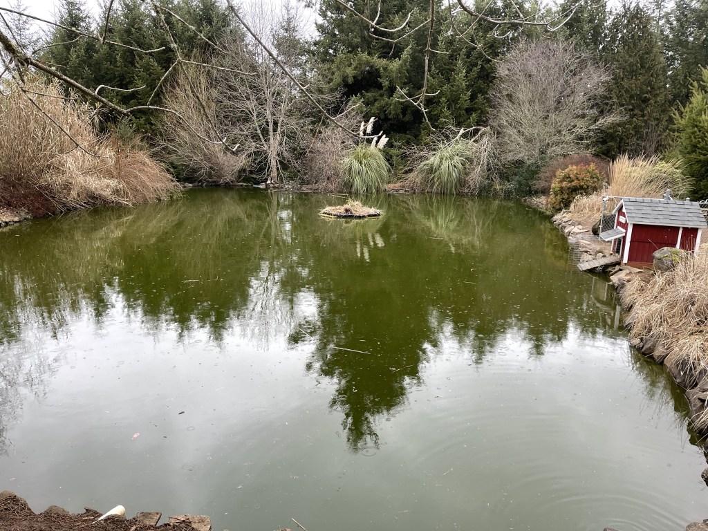 Pond and island