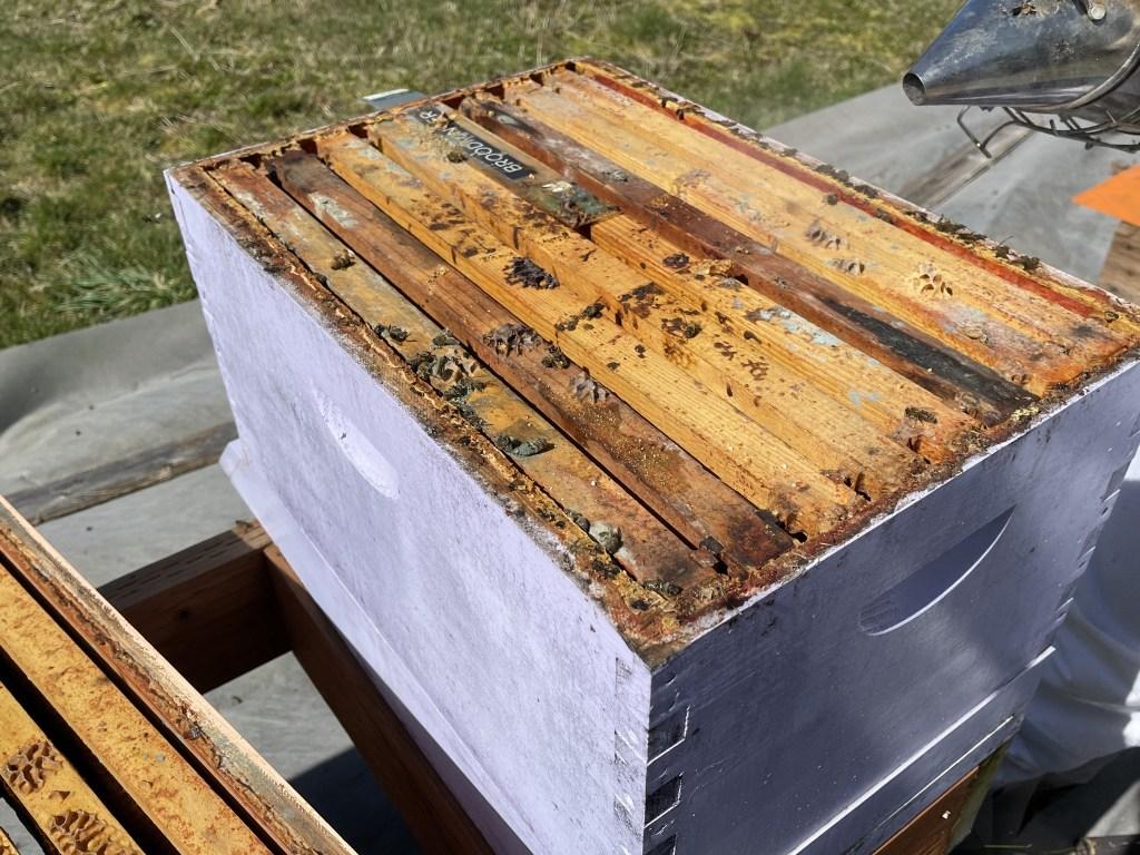 Purple hive: dead