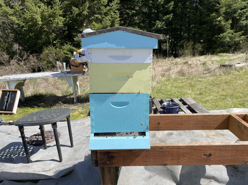 Turquoise hive