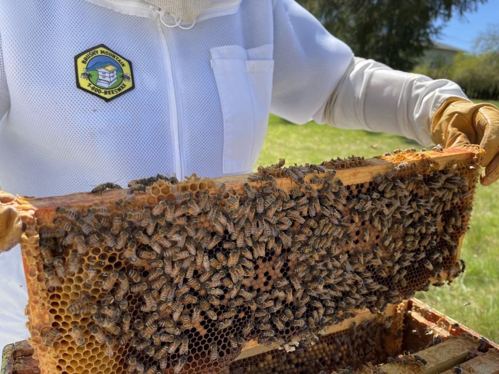 Yellow hive: brood frame