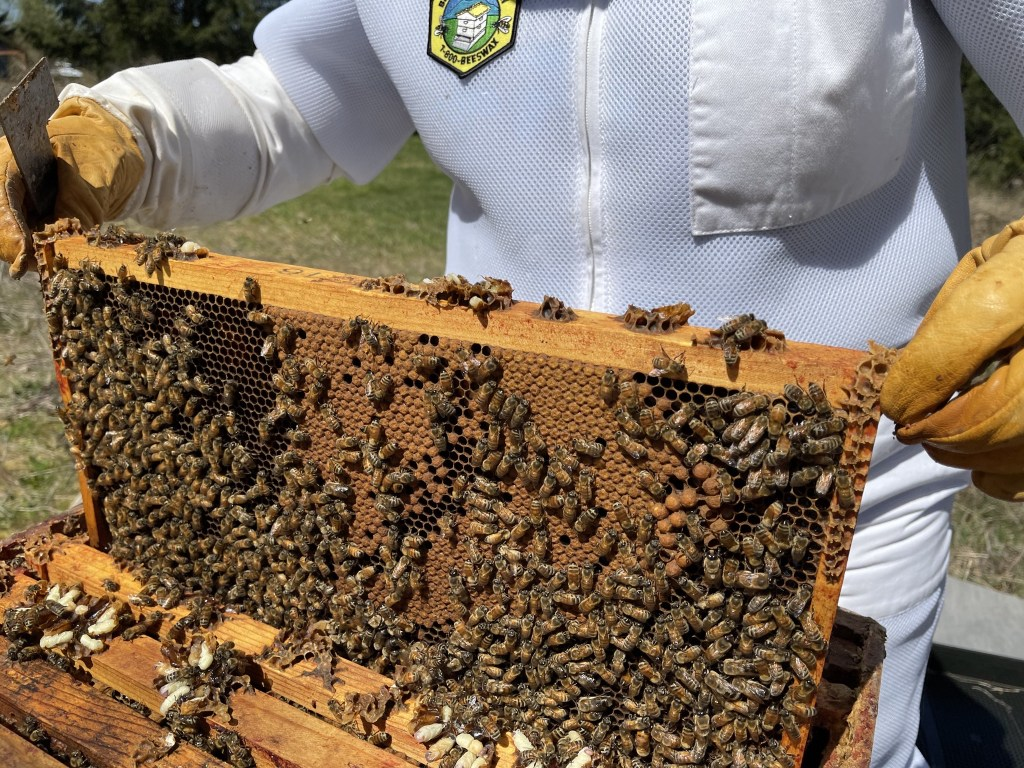 Cedar hive: brood frame