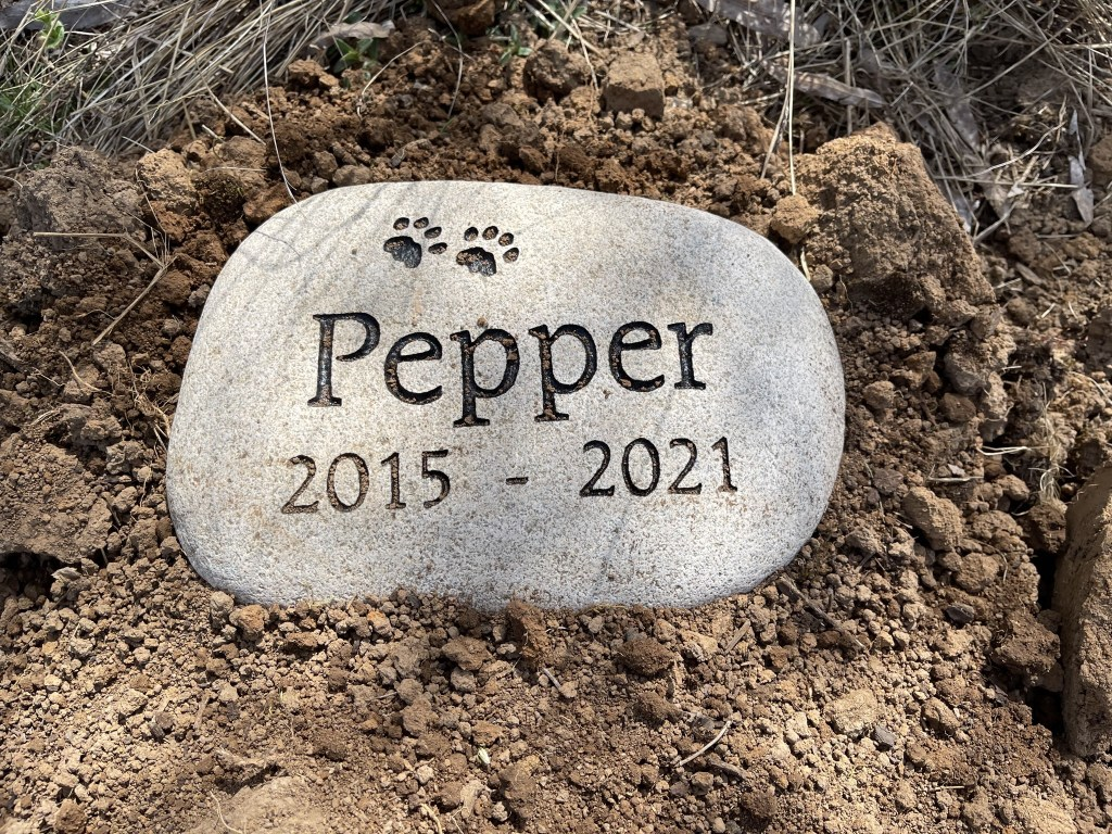 Pepper 2015-2021