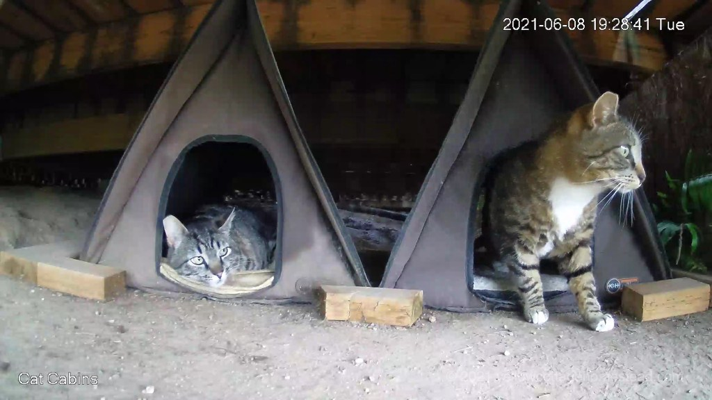 Two cabin cats