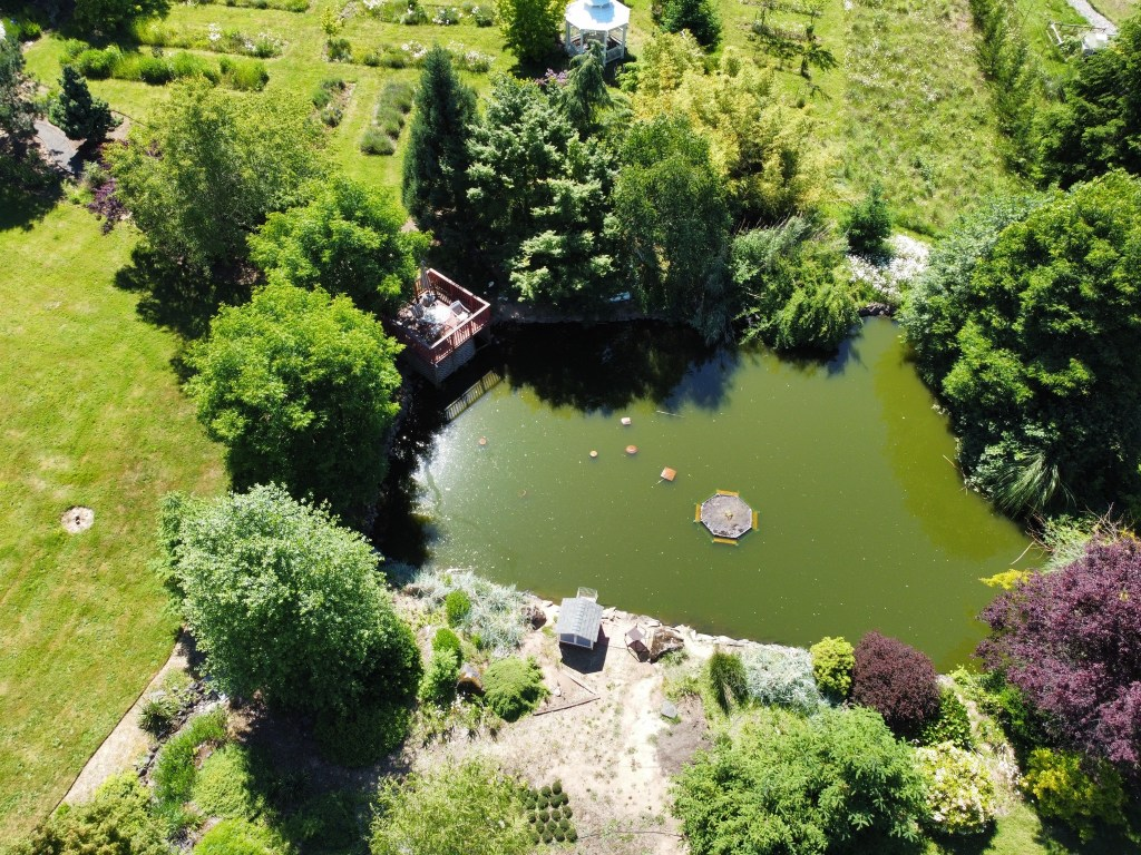 Aerial view of the pond