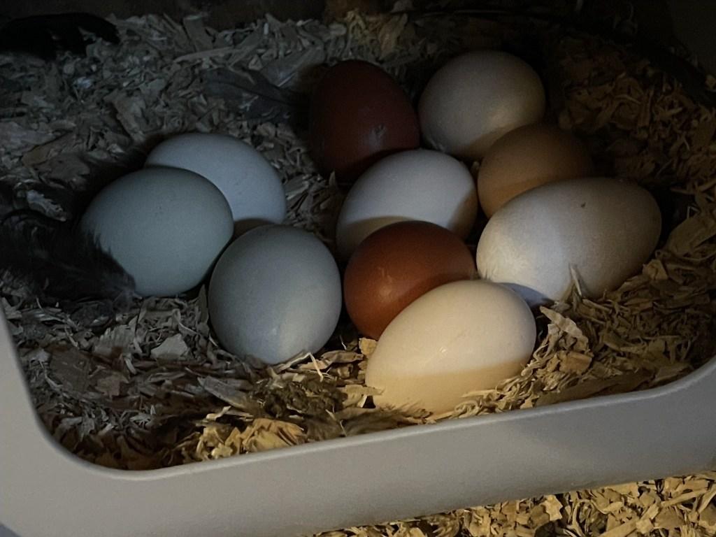 Eggs in a nesting box