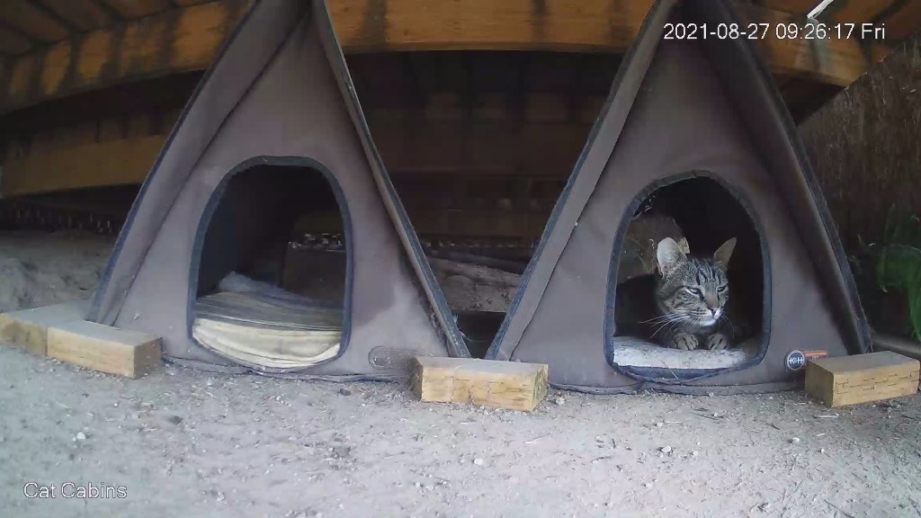 Cat in cabin