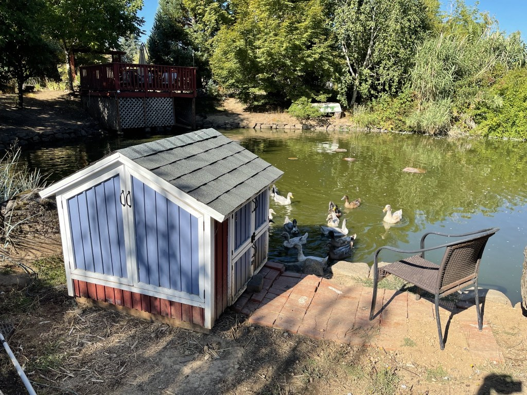 Duck house and ducks in the pond