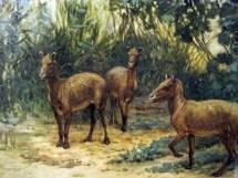 Prehistoric Eohippus Horse