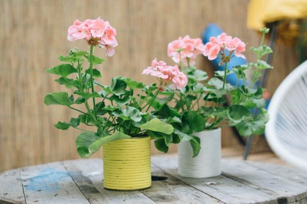 yellowgirl_Perlargonien im DIY Dosen-Blumentopf (4 von 15)