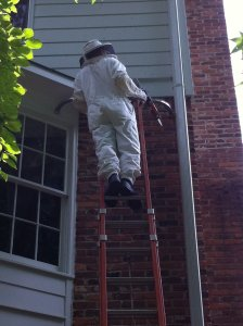 hornet inspection johns creek ga