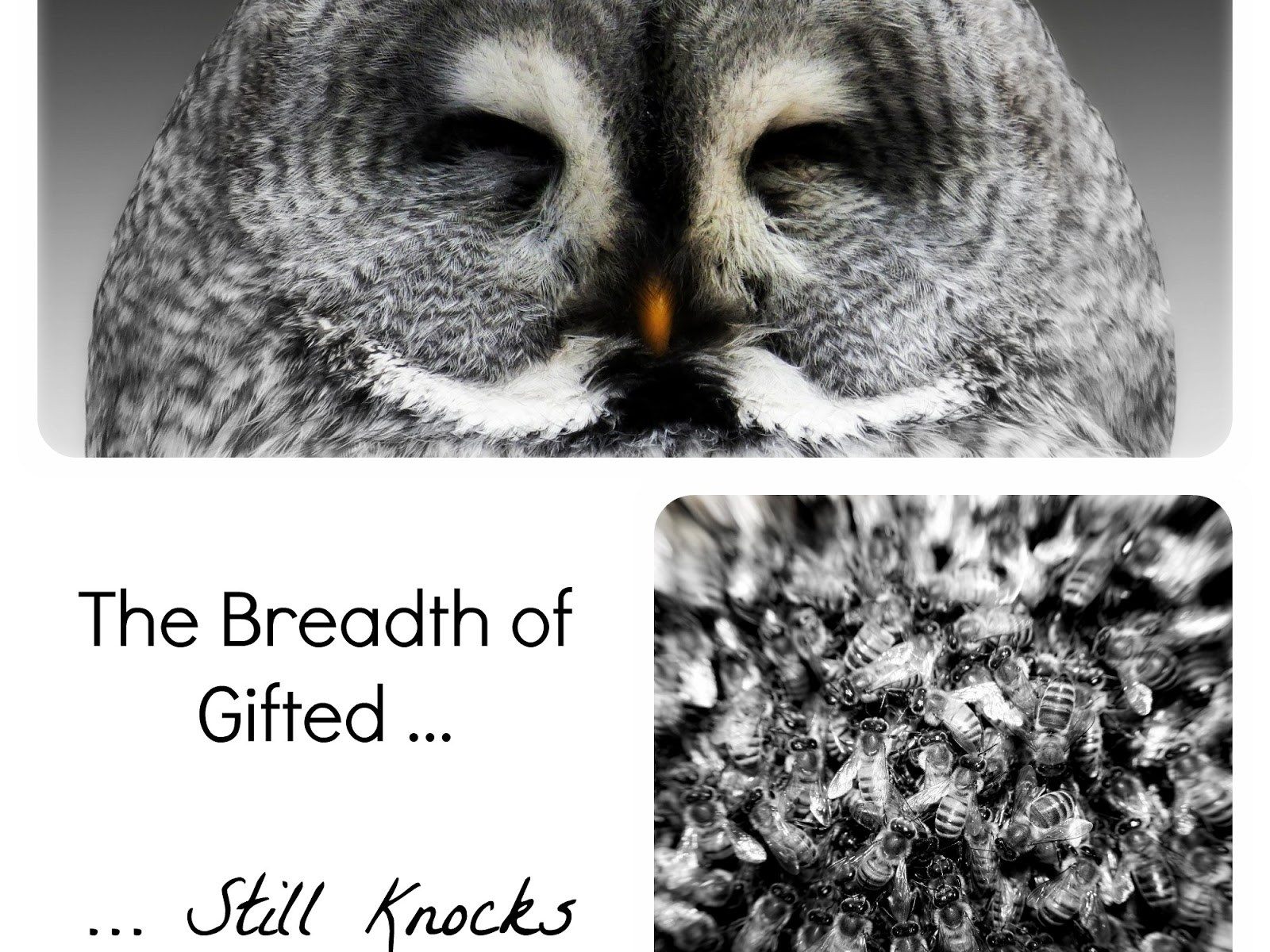 The Breadth of Gifted Still Knocks Me Flat, yellowreadis.com Image: A grey owl, and bees