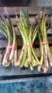 Asparagus in bunches