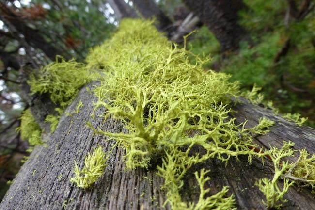 Love lichen!