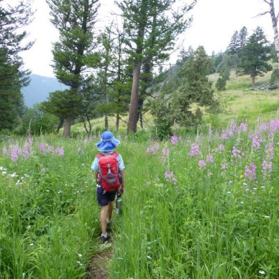 boy hiking in wildflowers