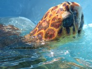 A visit to a turtle conservation project
