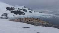 Here was saw our first colony on the Gentoo penguins