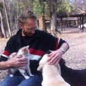 Most campsites come with a collection of pets