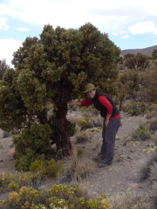 The purpose of which was to take a look at the Queñoa trees, considered to be the highest growing trees in the world