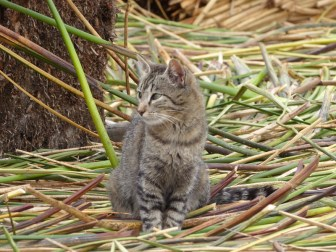 Cats have an important role to play in keeping rats and mice down