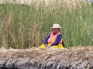 The islands are built on blocks of reed bed cut from the lake floor, with layers of cut reeds laid on top