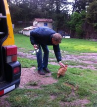 The campsite chickens kept us tidy