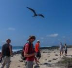 Getting close to the frigatebirds