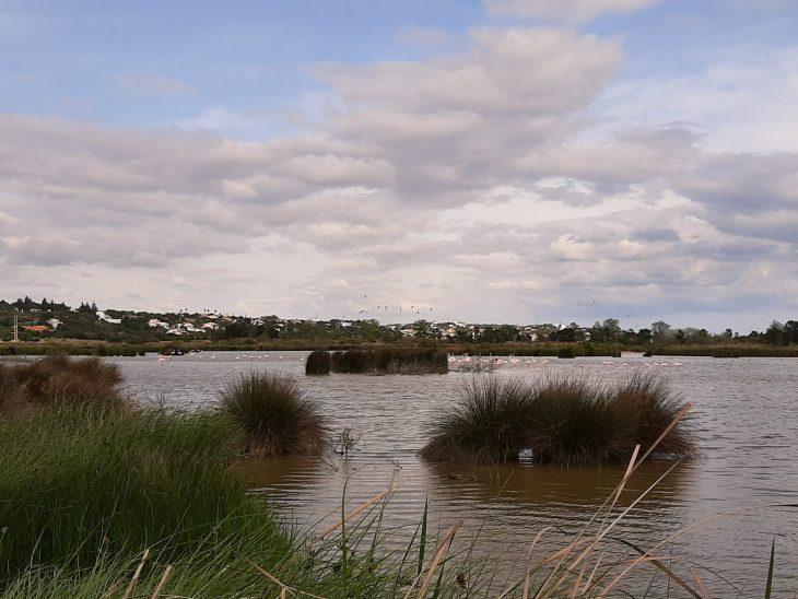 Flamencos en el Lago de Salgados