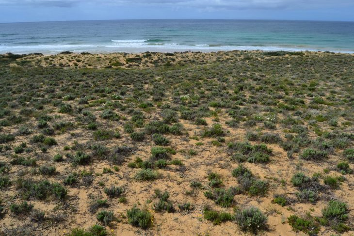 Dunas de Praia Grande