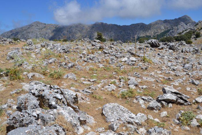 Sendero y Sierra del Pinar