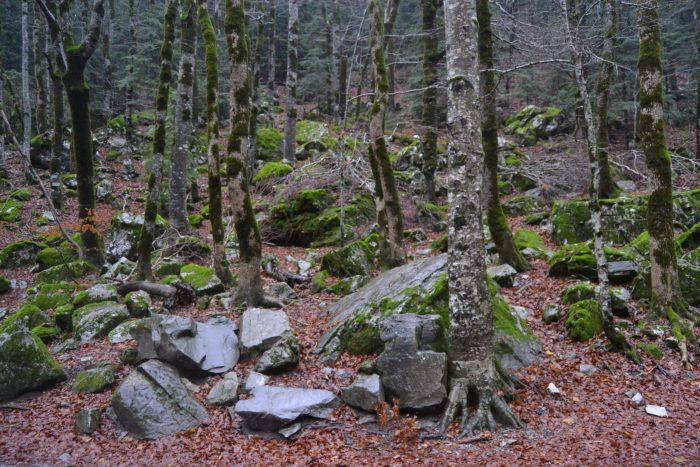Interior del bosque